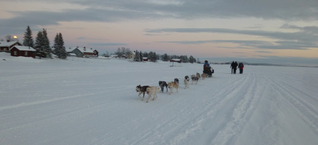 Dog sledge on the lake. Picture by Isabell Krisch, FZJ.