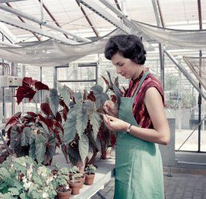 Seltenes Bild: 1964 untersucht eine Frau im Jülicher Gewächshaus Pflanzen.
